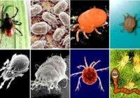 членистоногие паразиты человека классификация