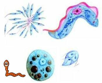 виды простых паразитов человека